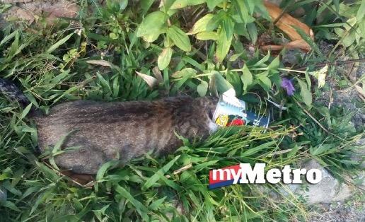 Kepala kucing tersangkut dalam tin sardin