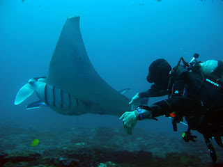 Diving in Manta Point Nusa Penida, christal bay diving site, diving