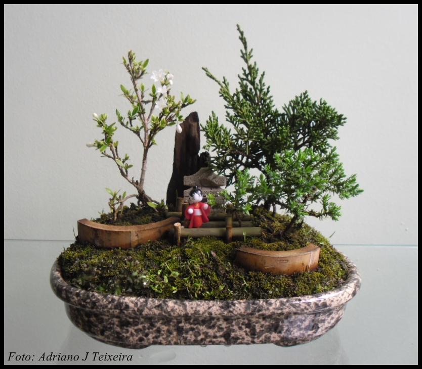 mini jardim oriental : mini jardim oriental:Um mini Jardim Oriental, Bonsai