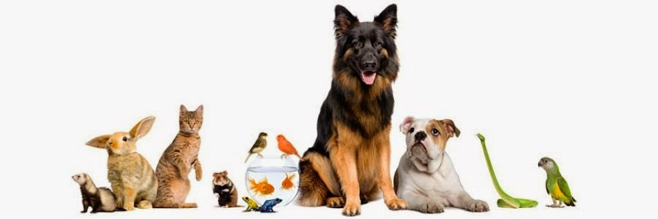 Pet Supplies and Product Reviews