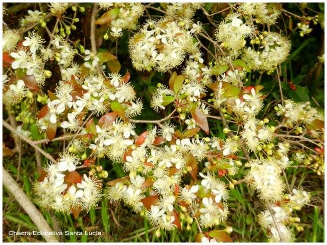 floración - Chacra Educativa Santa Lucía