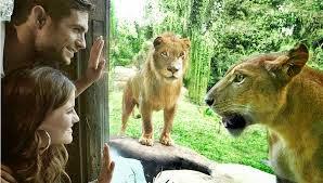 16 Tempat Wisata Yang Paling Menarik  Di Bali  - Bali Zoo Park
