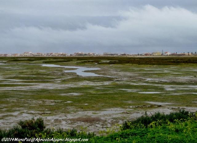Ria Formosa, Faro