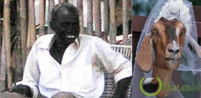 Lelaki Sudan nikahi kambing