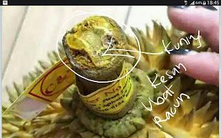 Durian Masak Tiruan Dari Thailand