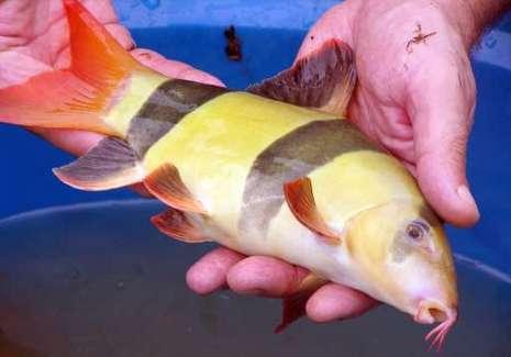 Le blog de l 39 anentome helena invasion d 39 escargots dans for Achat poisson clown