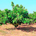 """Las suaves temperaturas auguran una vendimia con uvas de """"gran calidad"""""""