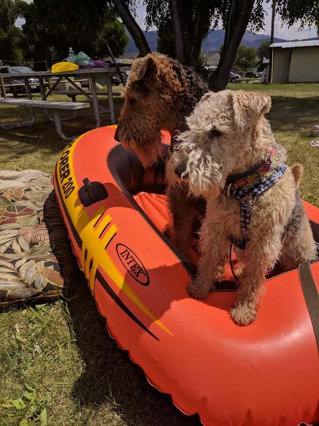Terrier Woody