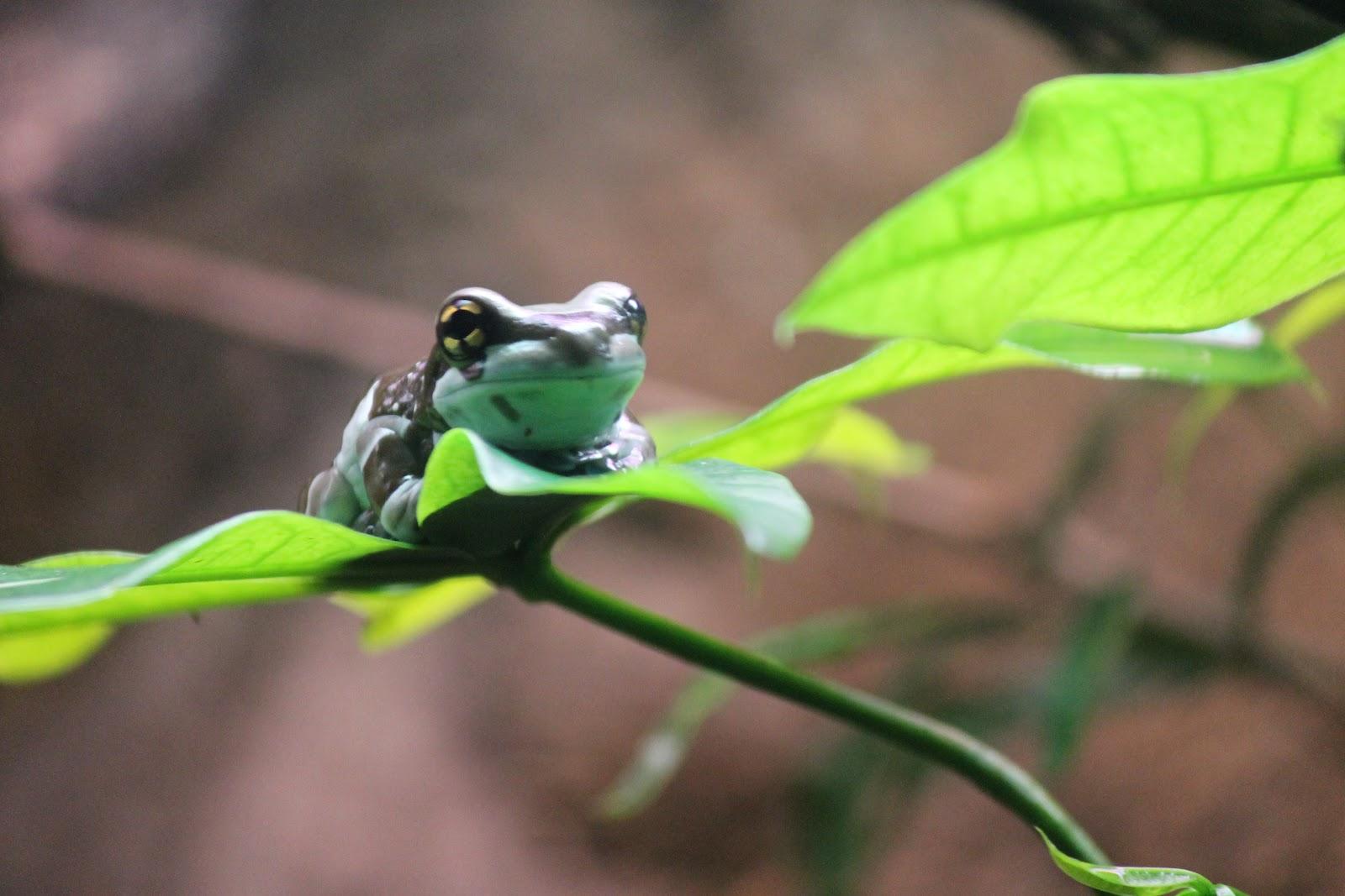luckeyfrog s lilypad april 2012