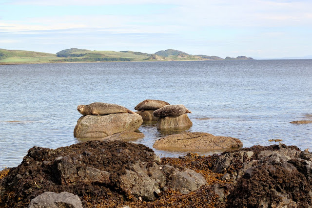 Sealed with a Kiss review seals on Isle of Bute