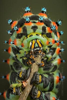 10 Serangga Tercantik Sekaligus Paling Menakutkan Sejagad