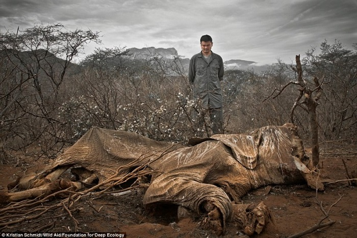 An elephant killed by poachers and left to rot.