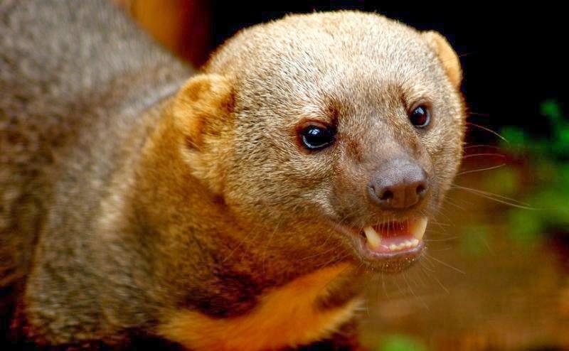 amazonas verde animais da floresta amazônica 15 fotos