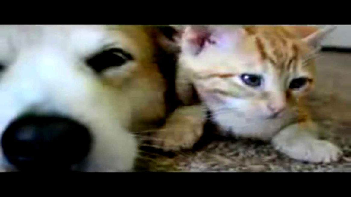Image of: Wallpaper View Original Size Playslack Funny Cat Video Clips Image Wallpapers Hd