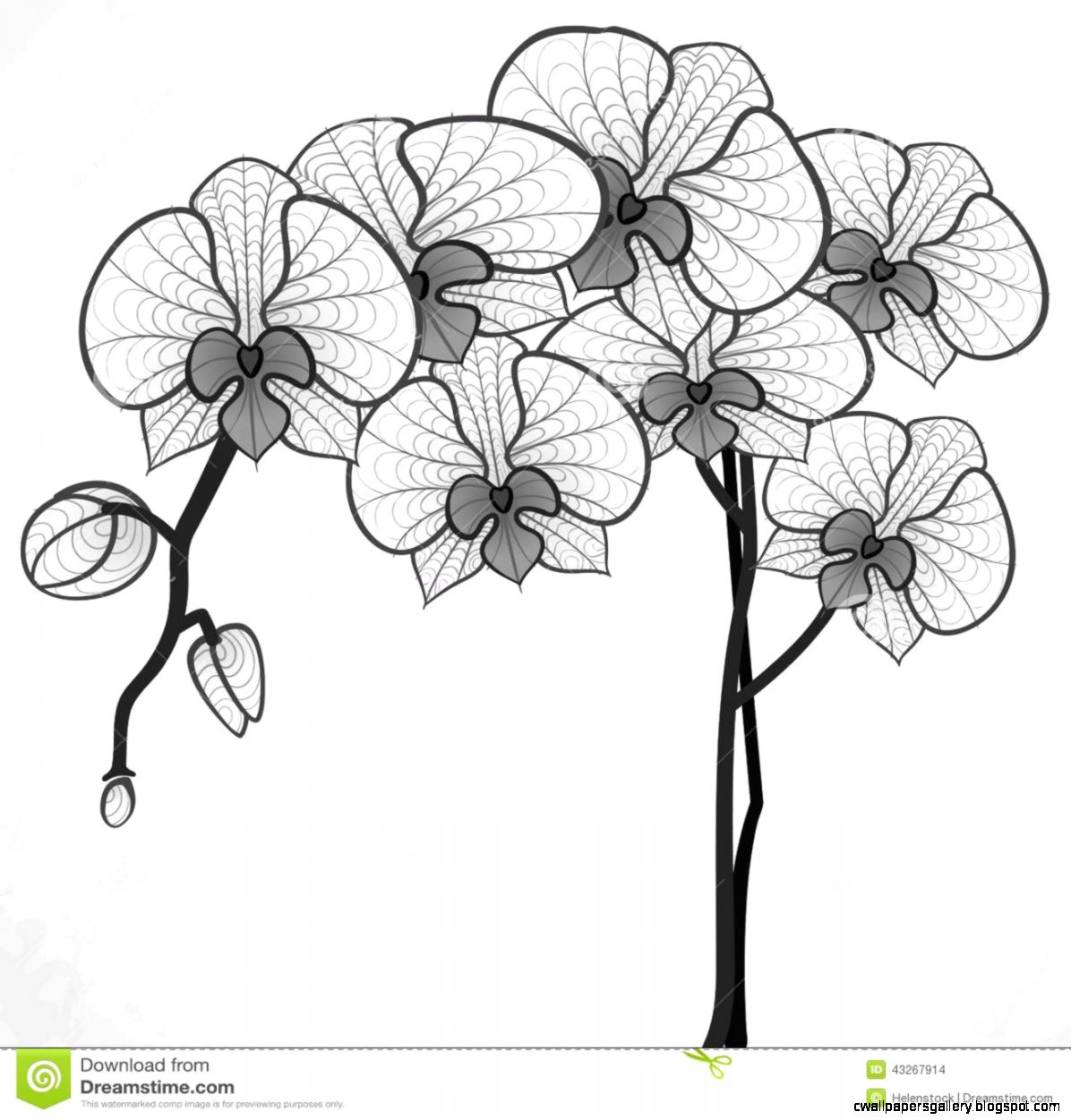 Hand Drawing Orchid Flower Stock Vector   Image 43267914