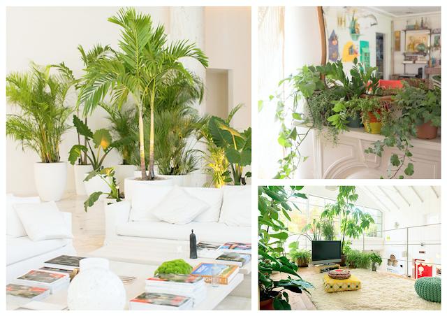 jungalife,the jungalow,plantes vertes,déco,déco bohème,70's,cactus,palmier,monstera,philodendron