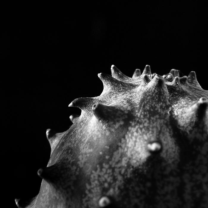 pepino, cucumber