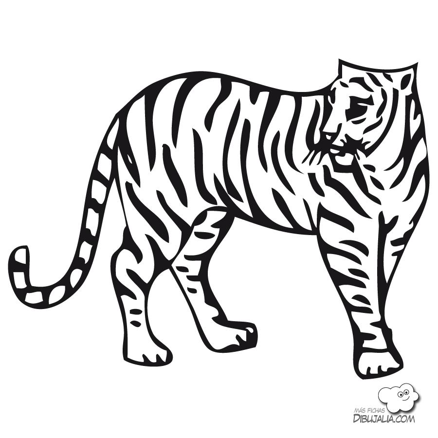 Загадки про Тигра для детей с ответами