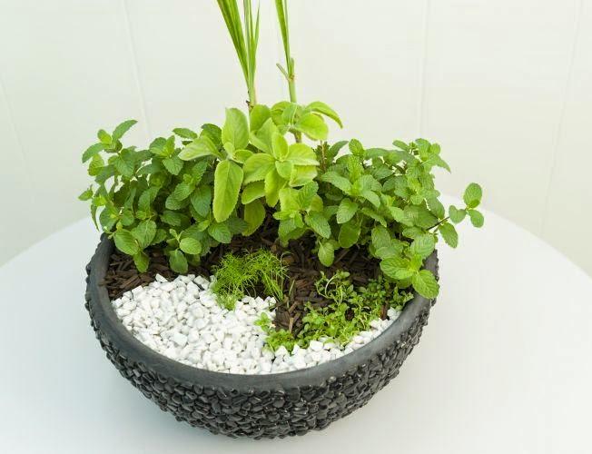 Conhecido decorar sustentável: Um pequeno jardim de ervas dentro de casa IG83