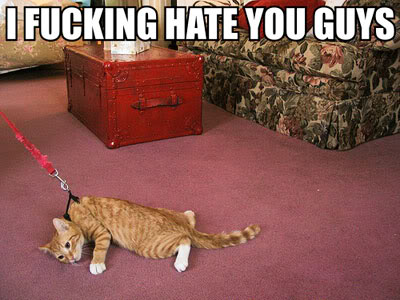 lolcats-i-fucking-hate-you-guys.jpg
