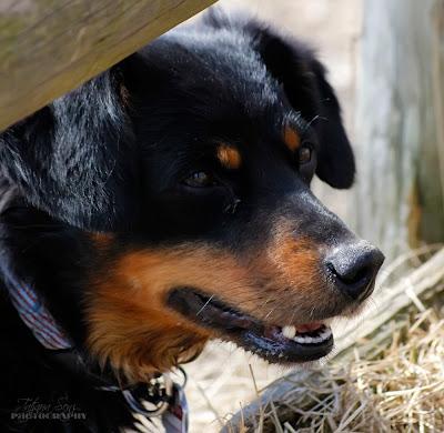 bilder hundeshooting, fotografie hunde, berliner fotografie hunde