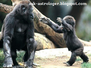 How alike are humans and the great apes- is there a language gene
