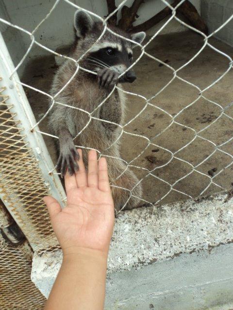 wild animals Nicaragua