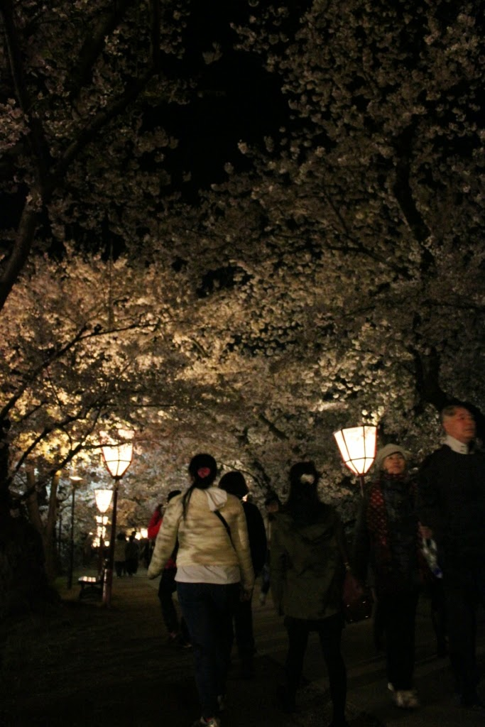 Hirosaki Castle Park Cherry Blossom Festival Sakura Tunnel by Night 弘前公園 さくらまつり 夜の桜トンネル