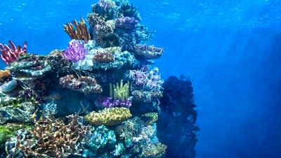 karang di dalam laut
