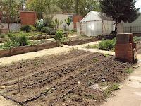 distribución por bancales de calabacín, tomate, pimiento, berenjena