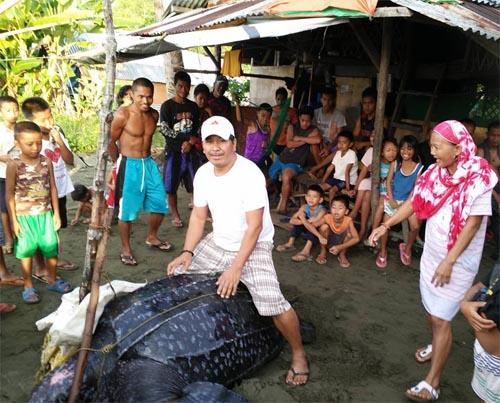 Leatherback sea turtle photos in Sta Rita Marabut Samar