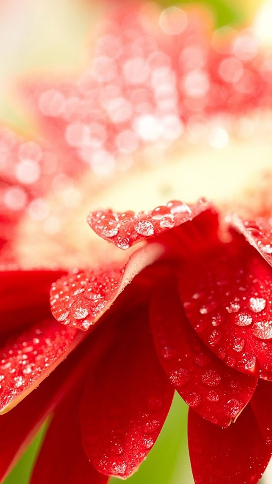 Bright Red Flower with Water Drops   Galaxy Note HD Wallpaper