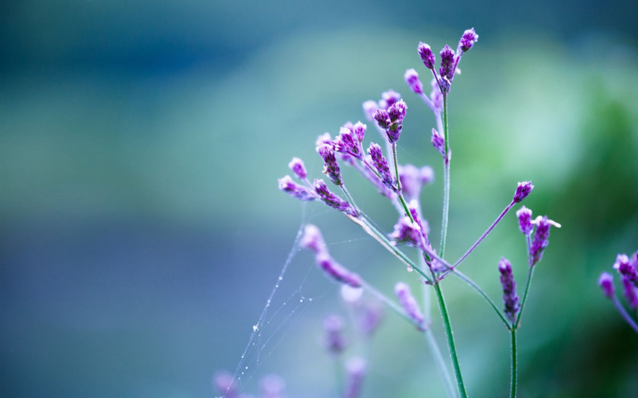 Les plus beau fond ecran fleurs fond ecran pc for Fond ecran telephone hd
