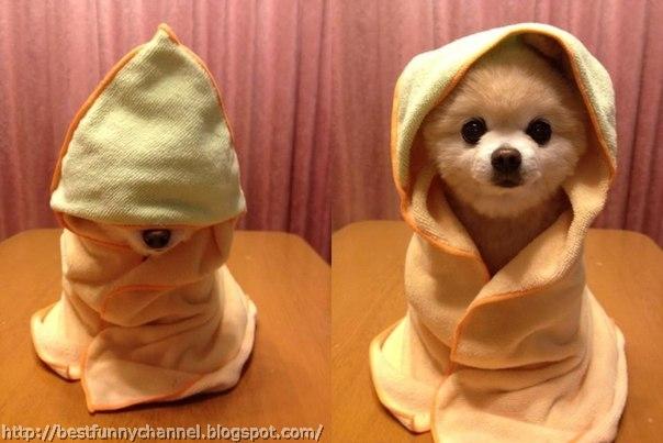 Funny puppy 17