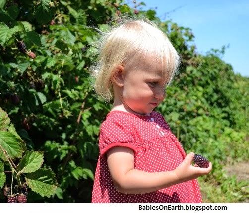 Baby Boysenberry