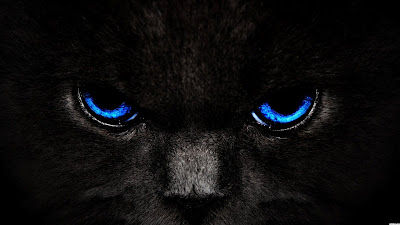 Black Cat Blue Eyes Wallpaper for Desktop Background