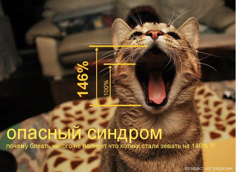Фото зевающего кота - опасный синдром