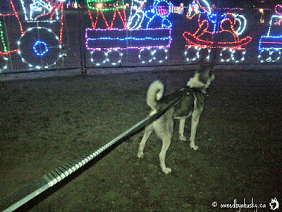 dogs, kids and Christmas lights
