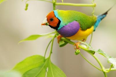 %D8%B7%D9%8A%D9%88%D8%B125 صور رمانسية طبيعية لأجمل الطيور 2014