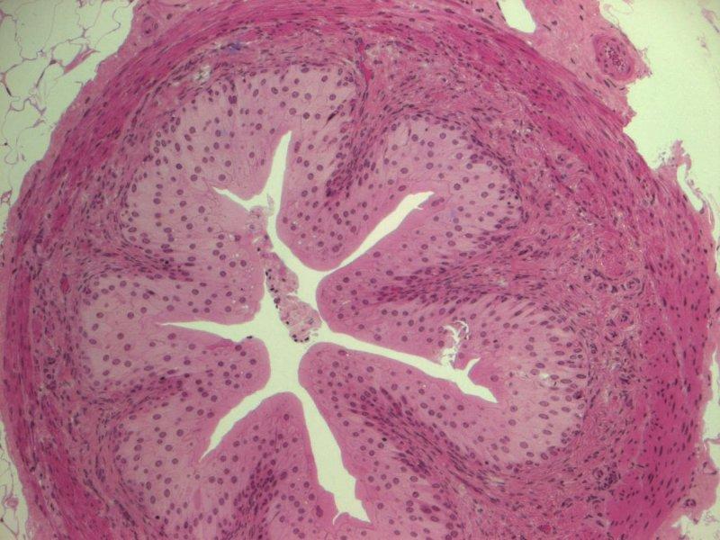 Pura medicina: Fisiología Motora Gastrointestinal