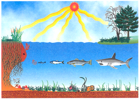 Komponen Biotik dan Abiotik dalam Ekosistem