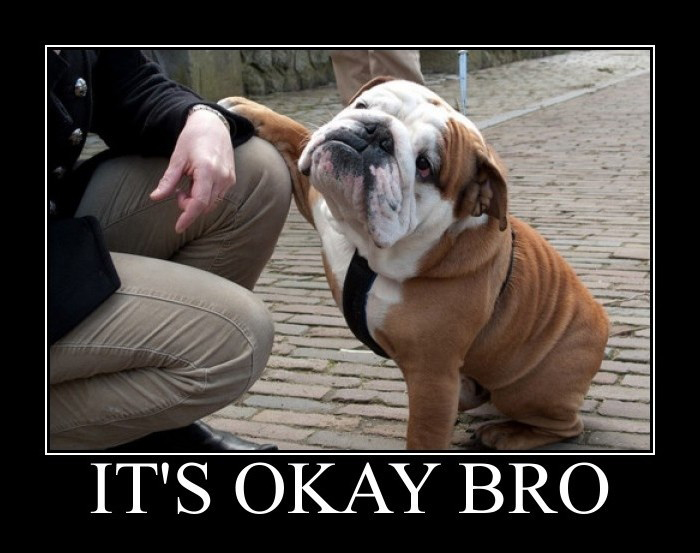 It's Okay Bro - Puppy Pug - So Calming