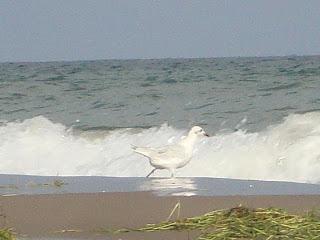 El Serrallo beach white bird and sea