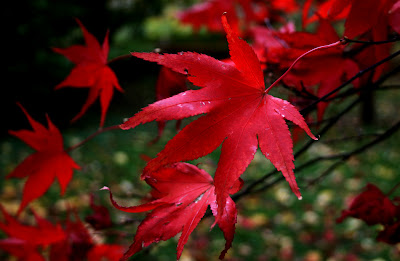 how to photograph autumn leaves