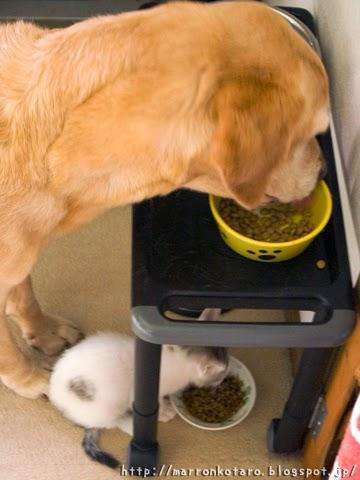 犬と猫の食事風景