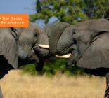 The Best of Botswana Safari
