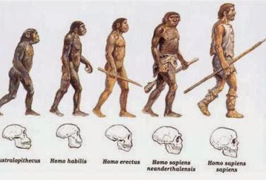 homo habilis,sapien,erectus,denisovano,neandertal,