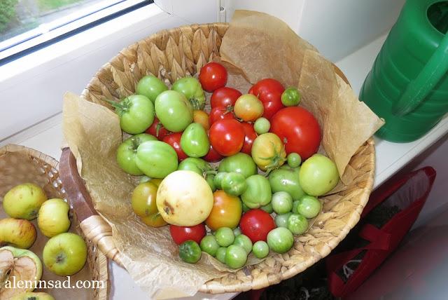 помидоры, томаты, без ухода, красные, зеленые, меланжевые, аленин сад