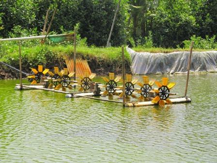 Teknis Cara Menumbuhkan Plankton pada Budidaya Udang Vaname | www.agrotaninusantara.com