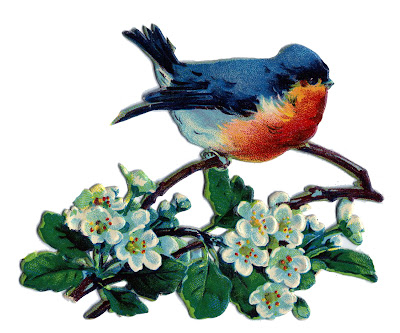 Vintage Image - Lovely Blue Bird with White Blossoms
